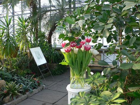 Оранжерея Таврического сада.