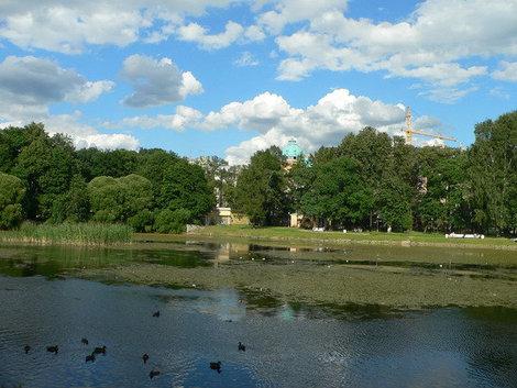 Раньше в Таврическом саду жили лебеди, а теперь можно увидеть разве что уток и голубей. Но! Весной в этом парке поют соловьи! Экзотика для центра Петербурга.