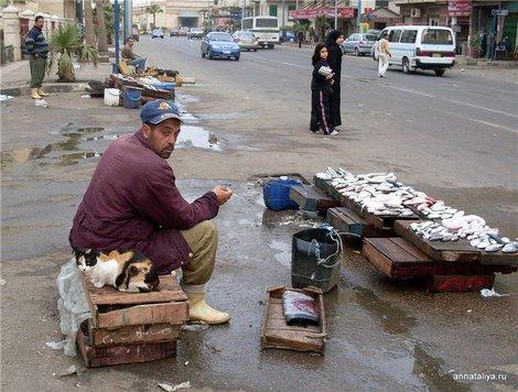 Александрия. На рыбном рынке