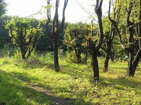 Парк в Подгорцах