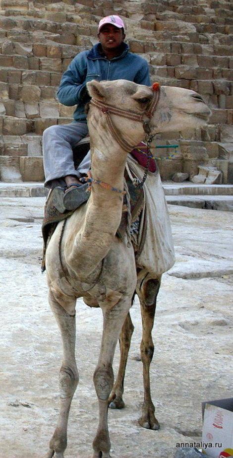 Горячий египетский юноша