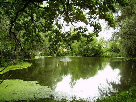 Болдинская природа располагает к творчеству и уединению.