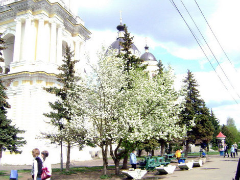 Рыбинск. Май вскипел яблоневым цветом