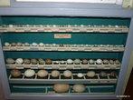 Яранск. Краеведческий музей. Яйца местных птиц
