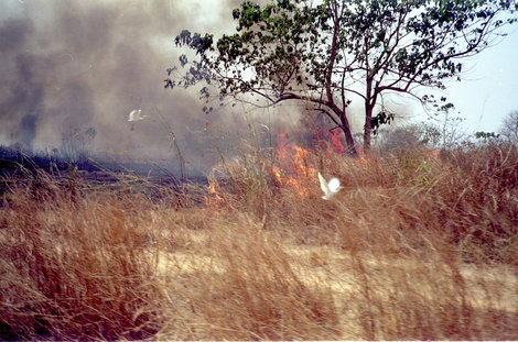Пожар и аисты
