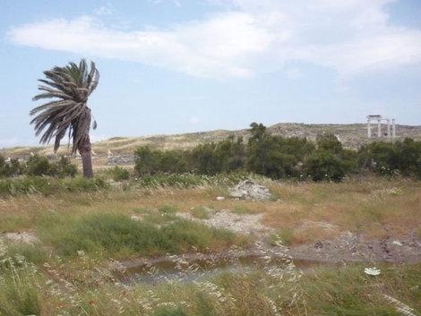 Раньше пальма располагалась на островке посреди священного озера
