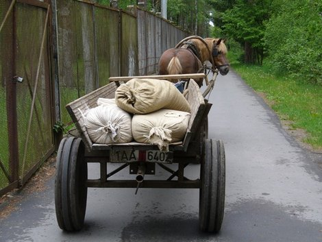 09. Лошадь с кормом для зверей
