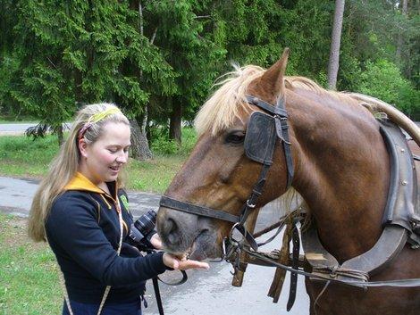 11. Анна кормит лошадь