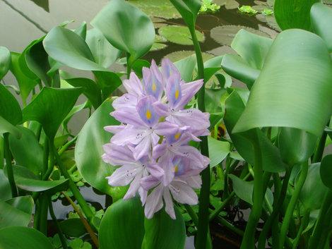 Все цветы, даже самые мелкие, очень хорошо пахли