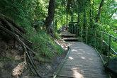 Над источником растут вековые сосны и проложены мостки.