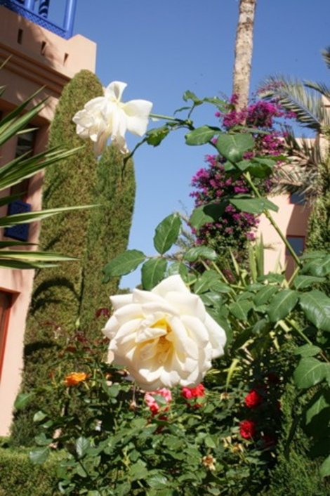 Сад отеля
