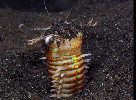 Фотография червя любезно предоставлена очень хорошим человеком.