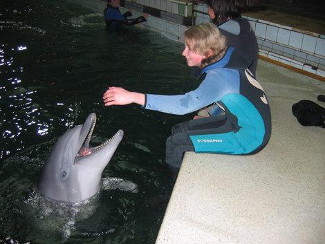 Дельфины на ощупь очень приятные, мягко-резиновые такие...