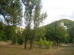 Вид на лавру из леса на противоположном берегу