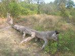 Бревно-крокодил