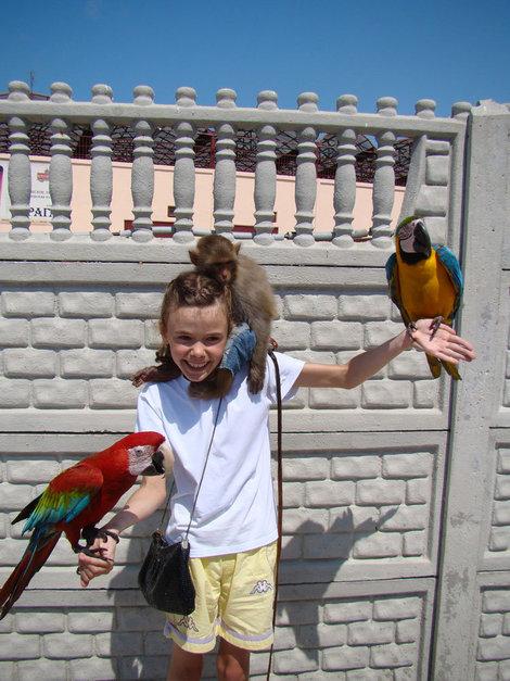 а в попугаях я гораздо....