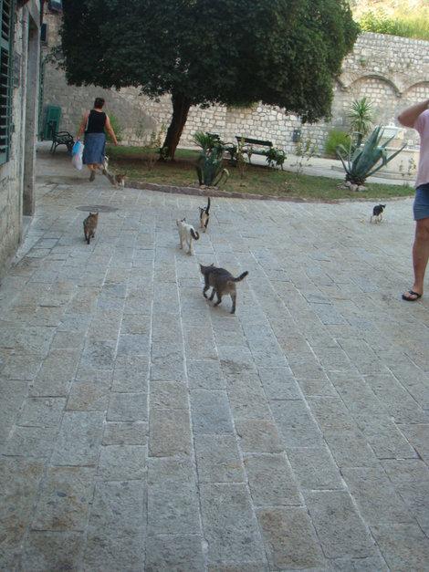 Кошек в Которе любят очень!
