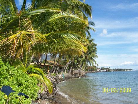 Пальмы поклоняются  океану