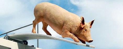 Свинка экстримал!