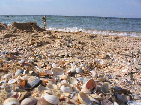 Ракушечный пляж Азовского моря