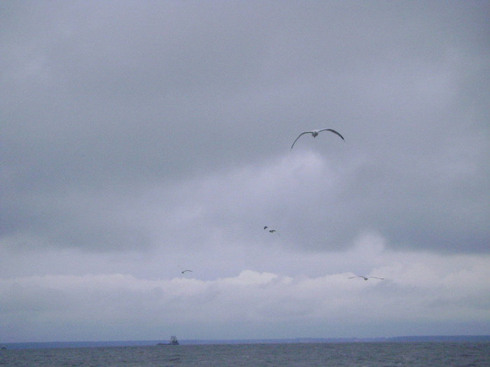 Чайки над волнами.