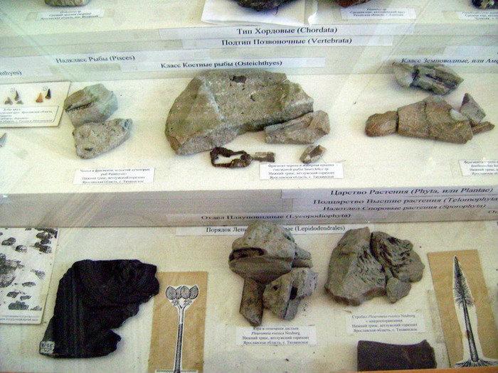 Экспонаты кабинета геологии рыбинского Центра детского и юношеского туризма и экскурсий вполне могут конкурировать с музейной экспозицией