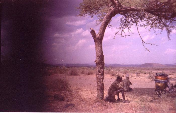 Эфиопский подпасок
