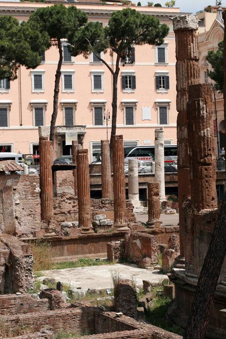 кошачий приют в Риме