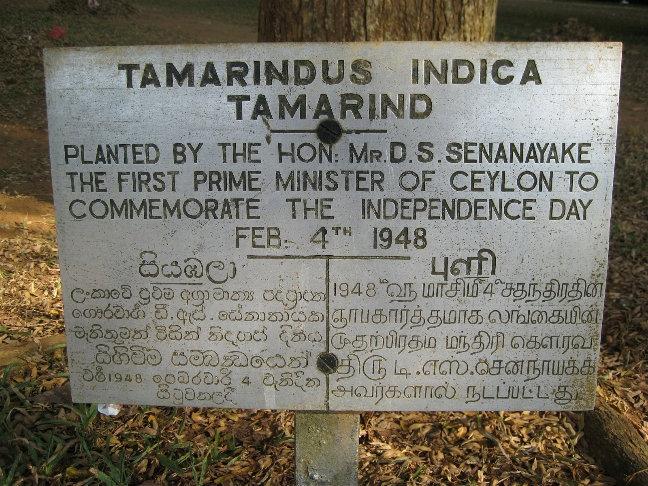 Тамаринд индийский или индийский финик — это растение семейства бобовых и единственный представитель семейства Тамаринд.