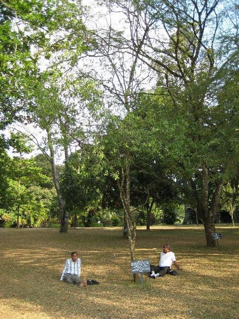 Cантал белый (Не путать с сандаловым деревом) — вечнозелёное тропическое дерево, паразитирует на корнях других видов. Основные ареалы произрастания — Индия, Гавайи, острова Тихого океана.