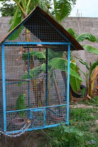 Папугай в клетке у соседей