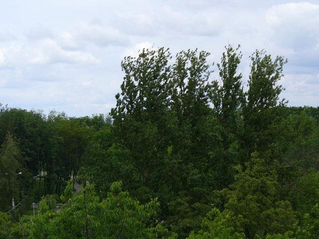…территория парка полностью скрыта зеленым пологом.