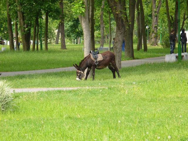Осел  — одно из средств передвижения в парке