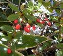 Все больше стало попадаться деревьев с пожелтевшими листьями и увешенных зрелыми плодами и ягодами.