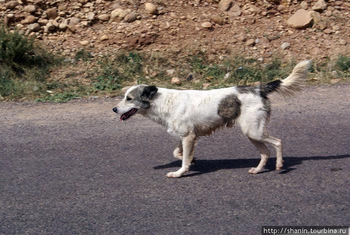 Собака-путешественник — сопровождала нас по ущелью на протяжении пятнадцати километров!