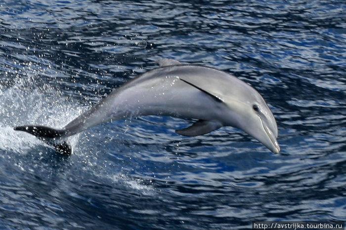 дельфин в открытом море