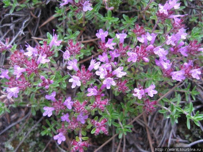 На Цапелином острове растут цветы необычайной красоты