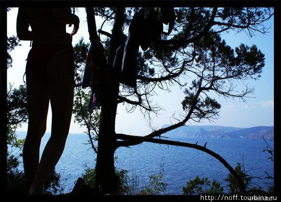 В районе Золотого пляжа. Чуть выше этого пляжа очень живописные места с крымской сосной и можжевельником