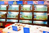 Рыбы в нашем магазине – море. Рыба и речная, и морская. Вся она неизменно вкусная и неизменно свежая. Мы можем купить либо живую, либо охлажденную рыбу. Но в любом случае она не будет заморожена.