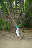 Необхватные деревья по пути к водопаду