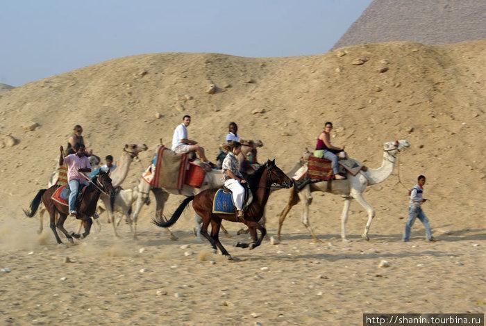 Туристы на лошадях и верблюдах — экскурсия по пирамидам Гизы