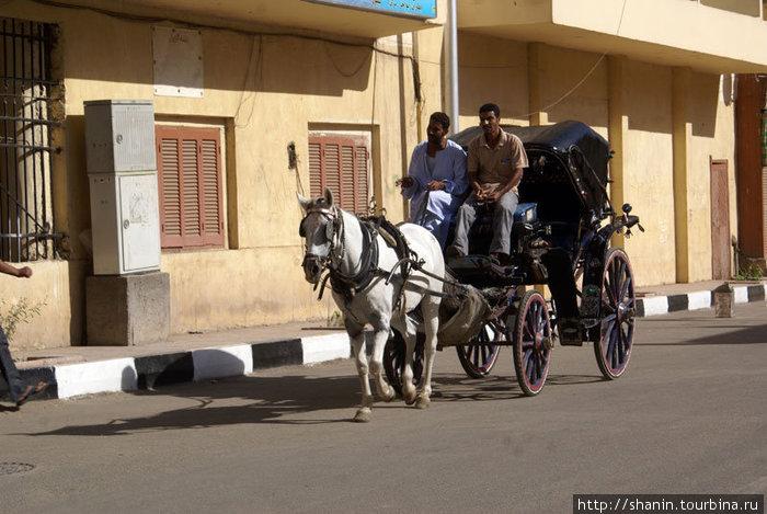 Конный экипаж в центре Луксора