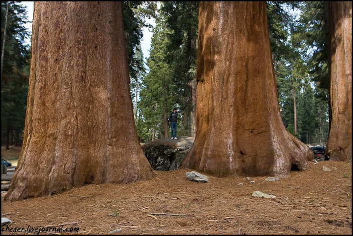 Для сравнения — на фоне айВан Национальный парк Секвойя, Соединенные Штаты Америки