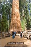 А вот и самое большое дерево
