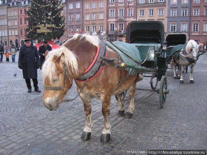 Варшавская лошадка