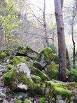Даже в голом лесу зелени достаточно