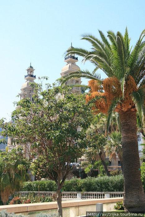 сад возле казино Монте-Карло