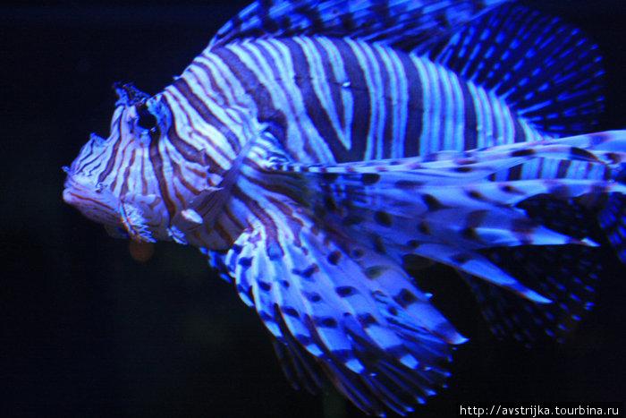 рыба в водном музее