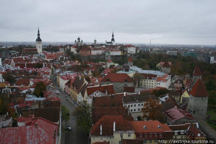 панорама Таллина с церкви Олевисте