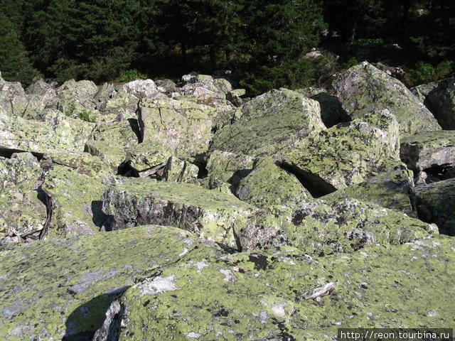 Камни сплошь покрыты лишайниками Златоуст, Россия